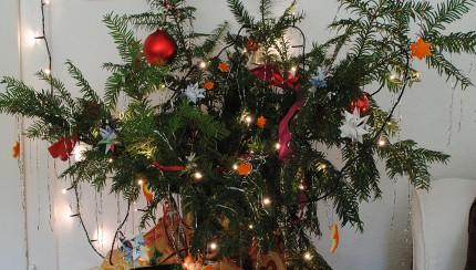 ZWL_Weihnachtsbaumausschnitt_1000