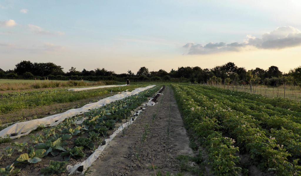 Solidarische Landwirtschaft